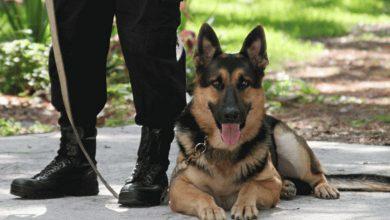 Dog Handler